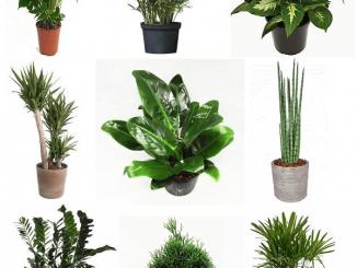 plantas-para-jardim-de-inverno-imagem-3